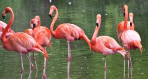 Scientists Balanced A Dead Flamingo On One Leg To Unlock The Bird's Standing Secret